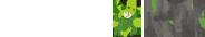 лого Зелена корова